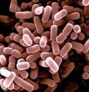 Компьютеры из бактерий приблизились к реальности
