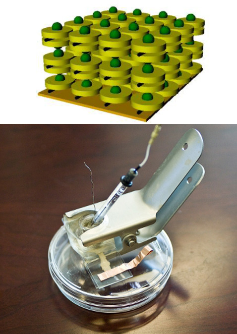 """На изображении: вверху несколько идеализированная схема  """"живой """" солнечной ячейки.  Тёмно-зелёным показаны реакционные..."""
