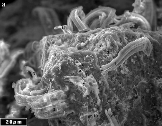 Метеорит, Жизнь, Бактерии
