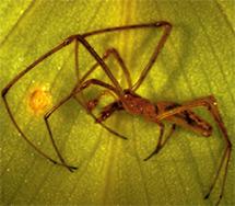 Гигантская паутина поражает размерами