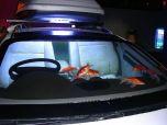 Автомобиль-аквариум