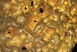 Обнаружены два ранее неизвестных свойства золота