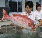 Японская рыба-робот выглядит, как настоящая