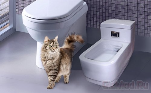Продвинутый кошачий туалет