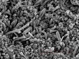 Бактерии для чистки зубов