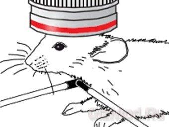 Ученые побывали в голове мыши