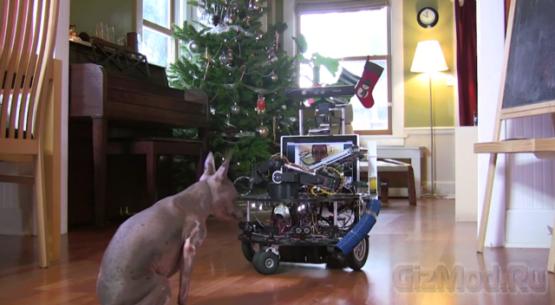 Робот DarwinBot для игры с собакой
