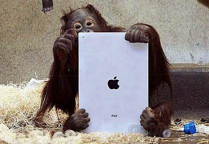 Американские орангутанги обучаются на iPad