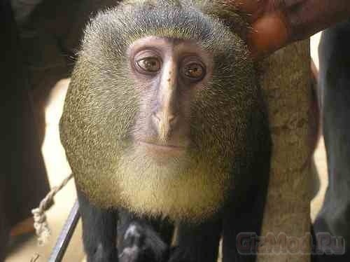 Обнаружен новый вид обезьян