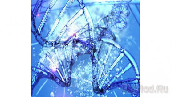 Архивы можно перекодировать в ДНК