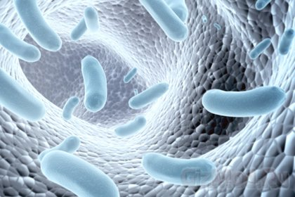 Человеческий кишечник - рассадник новых вирусов