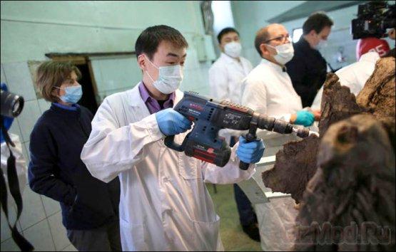 Ученые заявляют о готовности клонировать мамонта