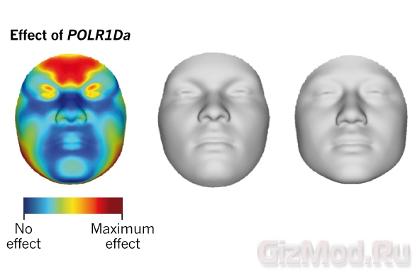 Лицо человека можно установить по ДНК