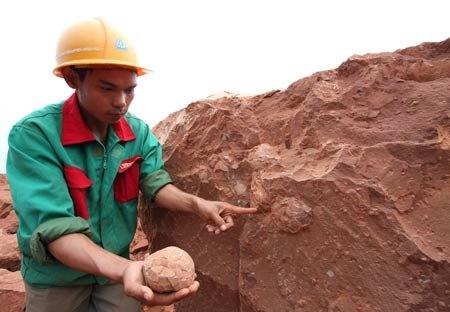 В Китае откопали яйца динозавров