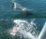 Дельфины замечены за игрой в ватербол медузами