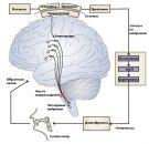 Человеку в мозг запихнули синтезатор речи