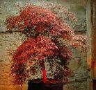 Дерево робот
