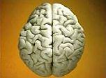 Человеческий мозг продолжает эволюционировать