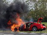 260 тысяч зеленых сгорели в Голландии