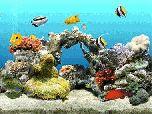 Dream Aquarium 1.0700 - снова рыбки на заставке :)