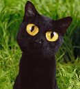 Эксклюзивный кофе из кошачьих фекалий