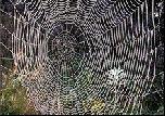 Cверхпрочные материалы из паутины