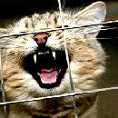 Ученые назвали кошку врагом человечества