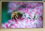 Новый 30-дюймовый монитор Samsung Electronics