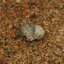 Найдена жевательная резинка возрастом 5 тысяч лет
