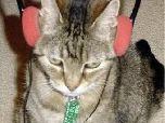 Появилось радио для кошек и собак