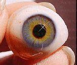 Ученые нашли способ возвращать зрение слепым