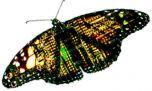 DARPA оснастит армию мухами-киборгами