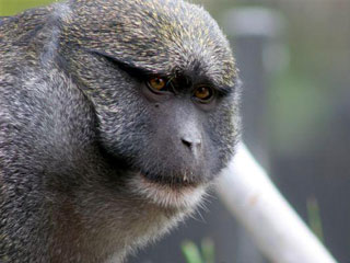 В Африке обнаружено новое гигантское животное