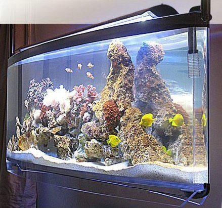 Spacearium – аквариумы нового поколения