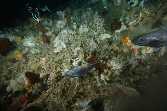 Множество новых видов обнаружено в Антарктике