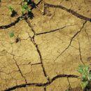 Растения можно будет вырастить даже в пустыне