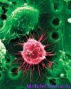 Найден способ восстанавливать нервные клетки