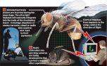 США занимаются созданием насекомых-шпионов