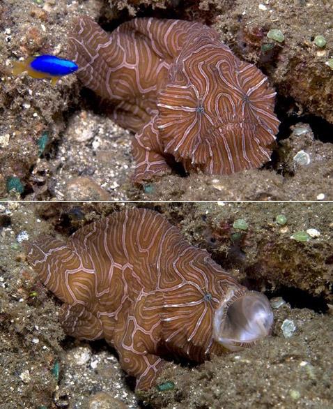 Неизвестная рыба с почти человеческим зрением