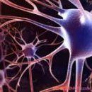 Доказано - нервные клетки восстанавливаются