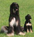 В Корее ученые клонировали собаку