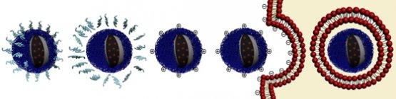 Наночастицы для лечения рака