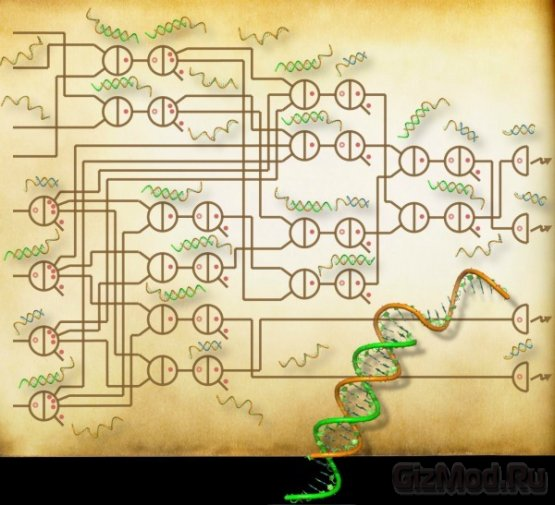 """Ученым удалось создать """"ДНК-калькулятор"""""""
