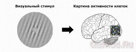 Подсознательное обучение мозга