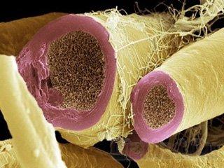 Нервные клетки возможно восстанавливаются