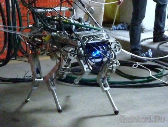 Итальянская версия робота BigDog