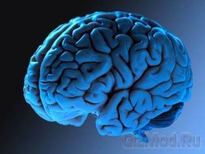 Мозг человека учиться во сне