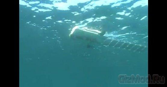 Робот-рыба Mola на солнечных батареях