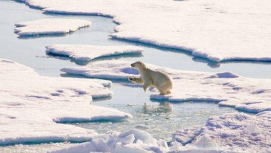 Глобальное потепление приносит определенную пользу