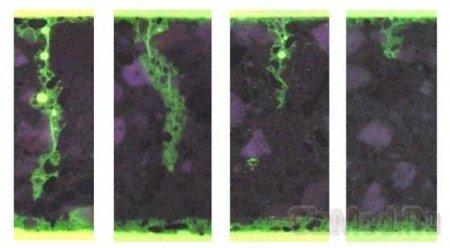 Самовосстанавливающийся биобетон